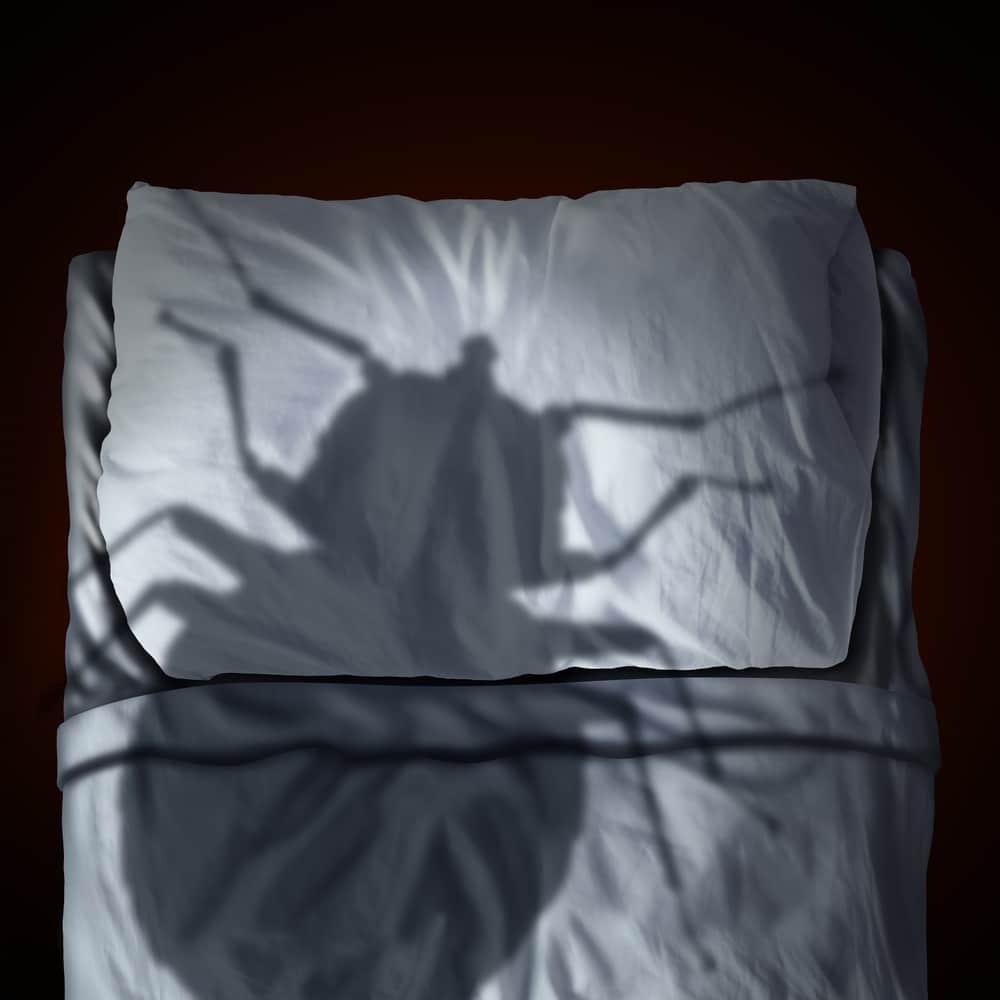 Les punaises de lit comment d celer leur pr sence blog decoration maison - Comment arrive les punaise de lit ...