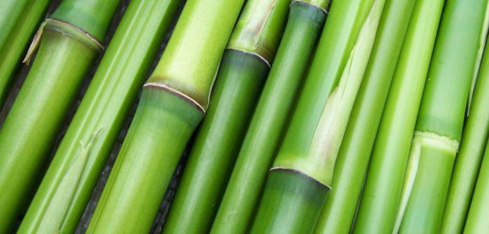 poudre-de-bambou-75g